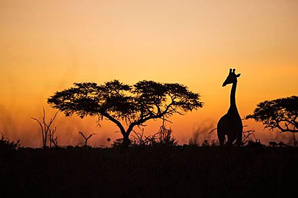 【中东非】博茨瓦纳、津巴布韦、赞比亚三国定制自驾生态之旅