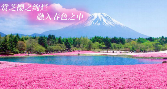 【日本】本州阪东富士山芝樱祭、和服体验双古都六日经典之旅(深圳往返)