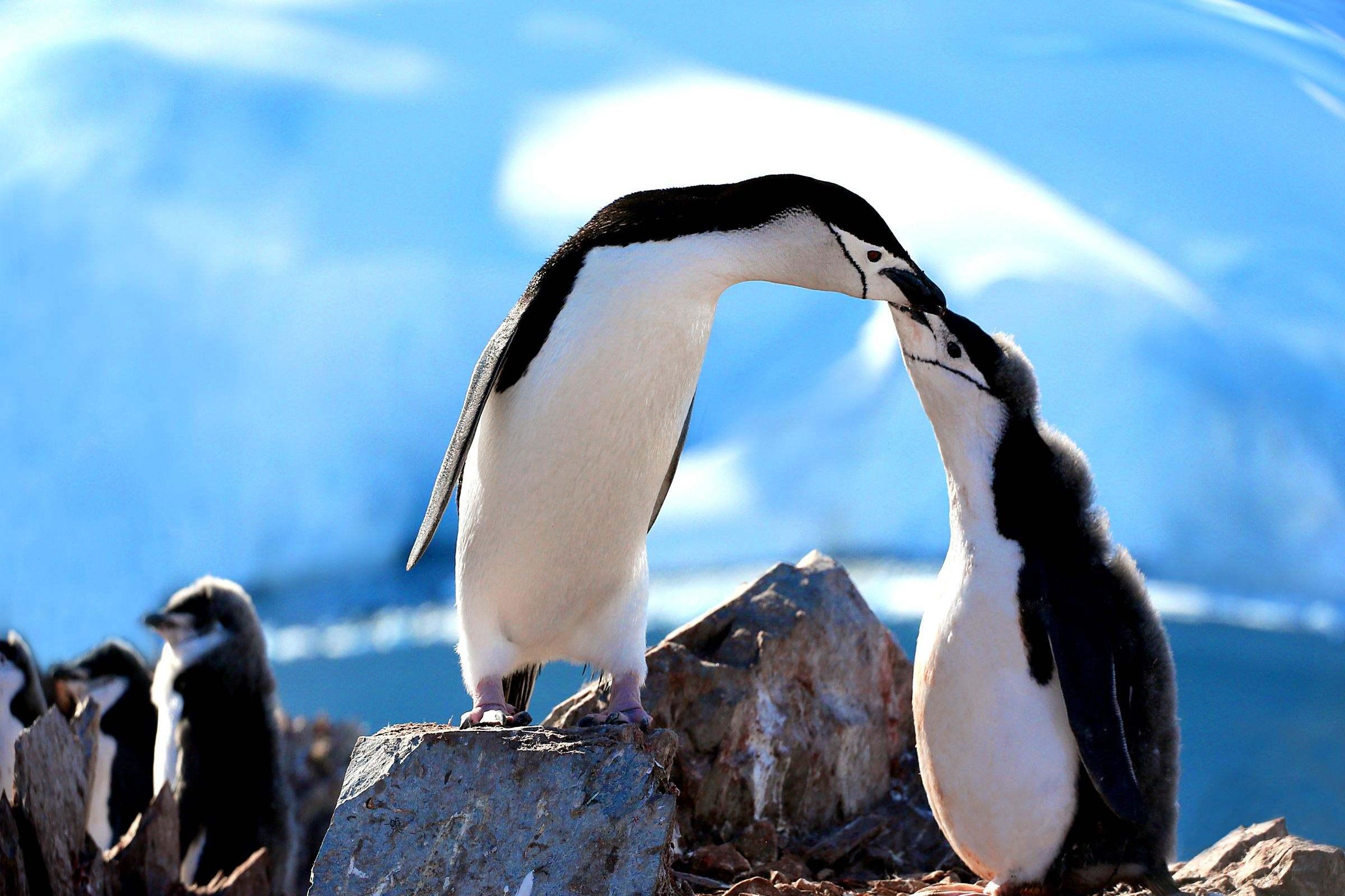 【南极】(亚特兰蒂邮轮)中国人包船南极摄影巡游 16 天团
