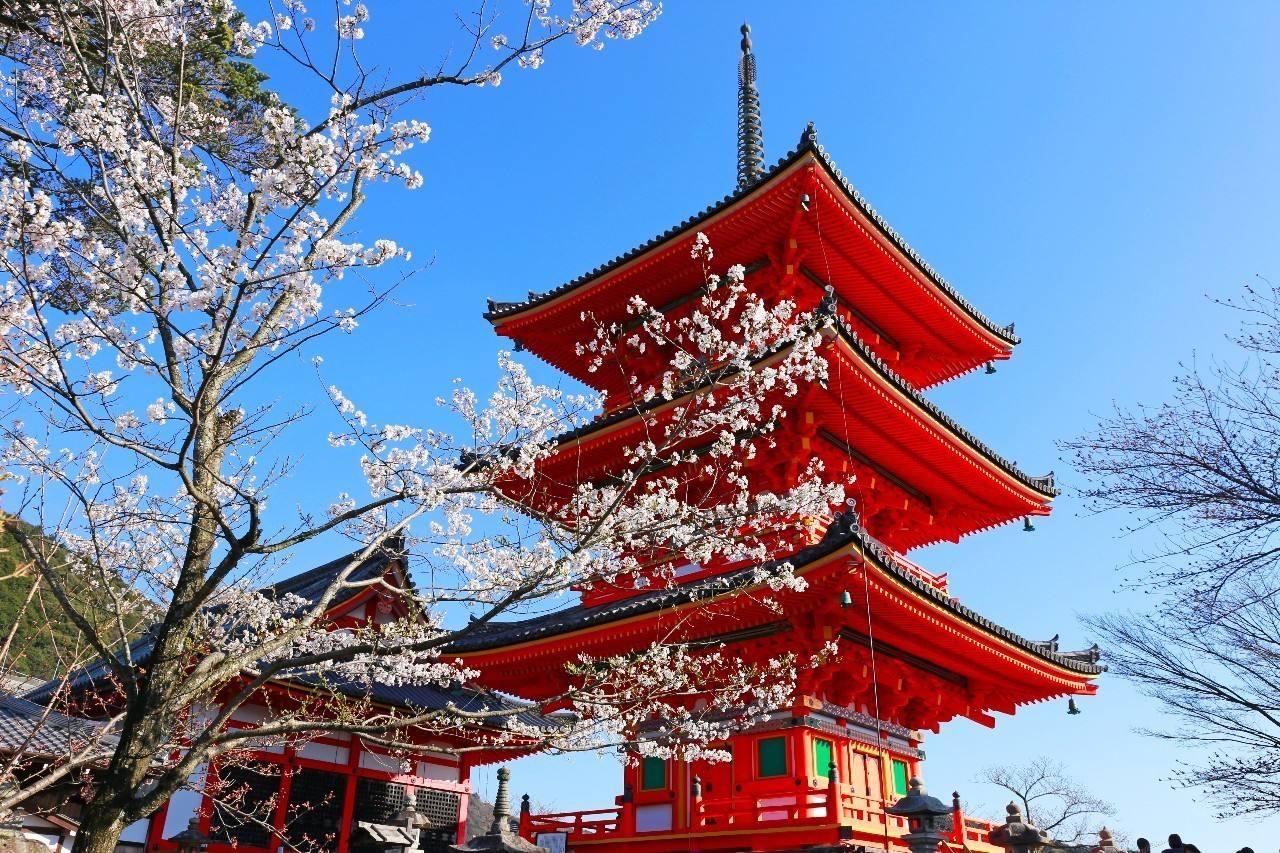 【日本】本州阪东富士山芝樱祭、和服体验双古都六日经典之旅(香港往返)