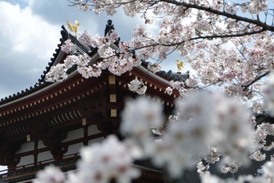 【日本】本州六天和风之旅(A线)