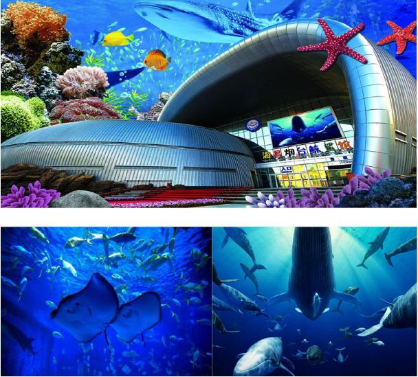 【品質儒海親子·攜手童行】 煙墩角天鵝湖、海洋鯨鯊館、模擬駕航、奧帆之風五天雙飛親子游