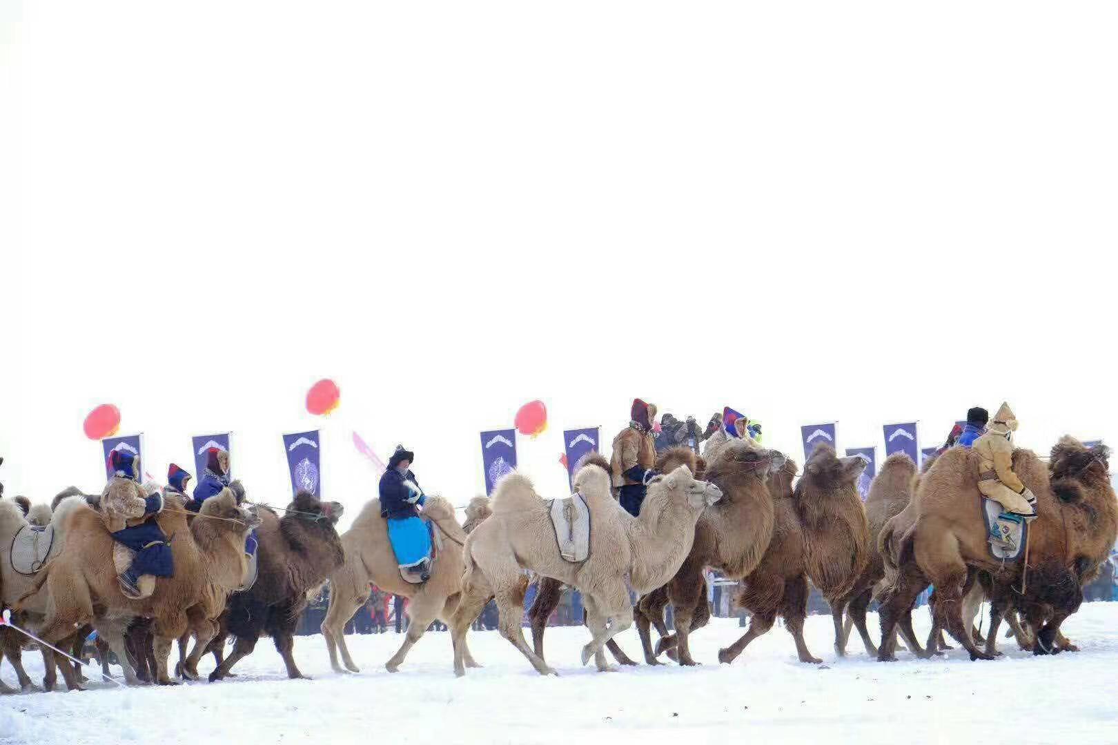 【惠游冰雪那达慕越冷约热情】一年一度呼伦贝尔冰雪那达慕盛会、莫日格勒河、亚洲第一湿地、中科丽丽娅庄园、东山激情滑雪、中俄边城满洲里五天双飞游B线
